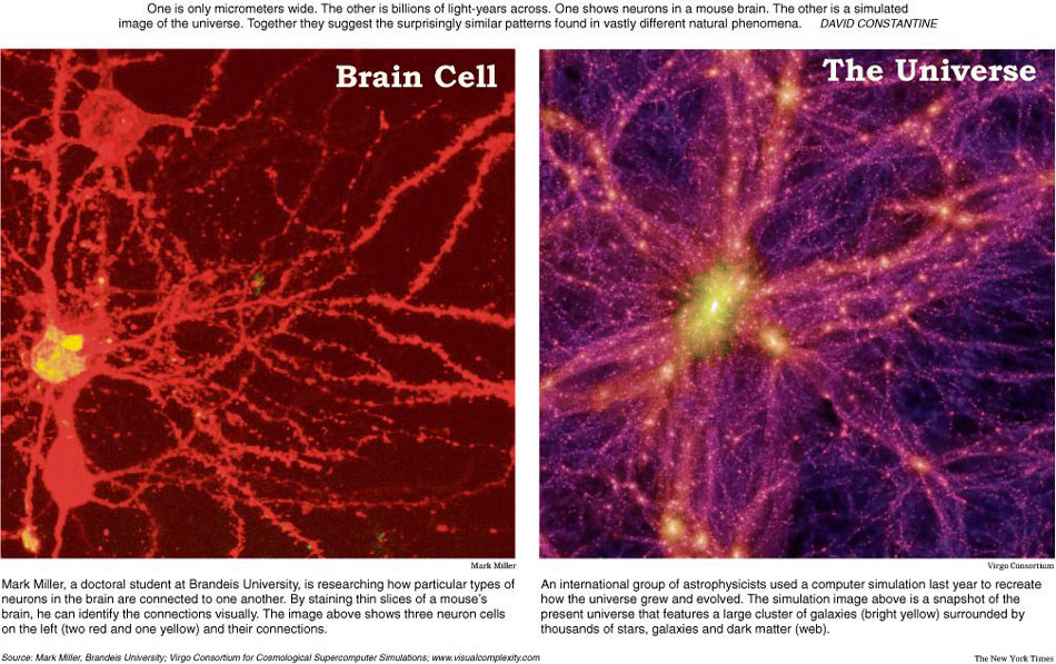 The structure of our brain looks exactly like that of the entire universe. Coincidence?
