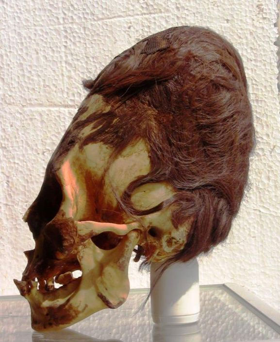 Elongated skull with red hair, as there have been found many in Paracas, Peru