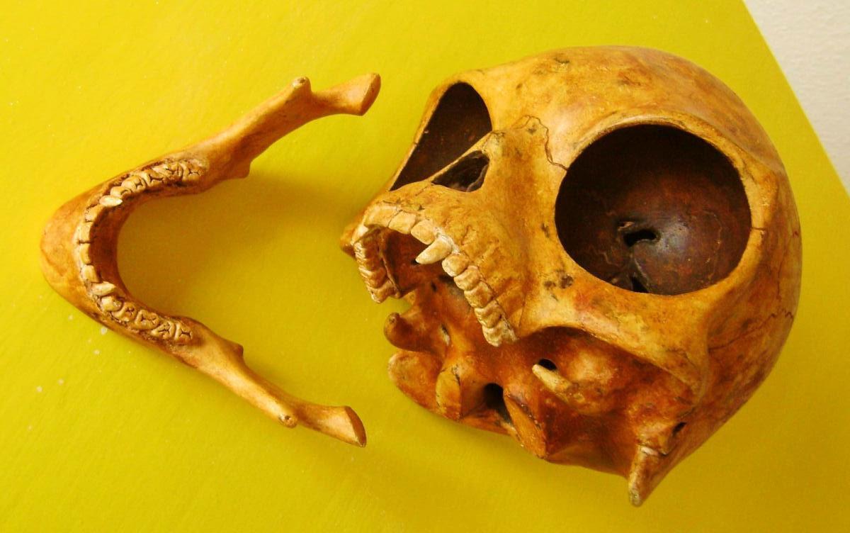 The Zealand Skull